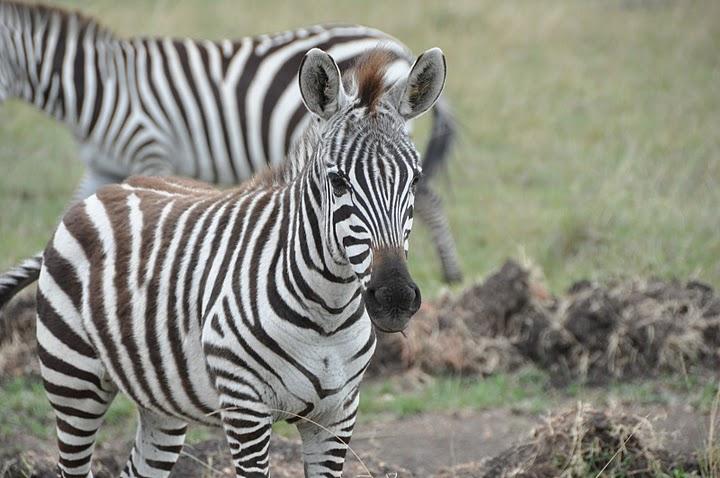 Micato Safaris – A Pinto Family Affair That Warms The Heart