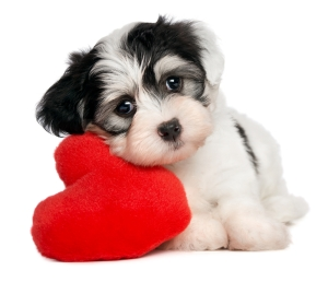 sweetest-day-12-puppy